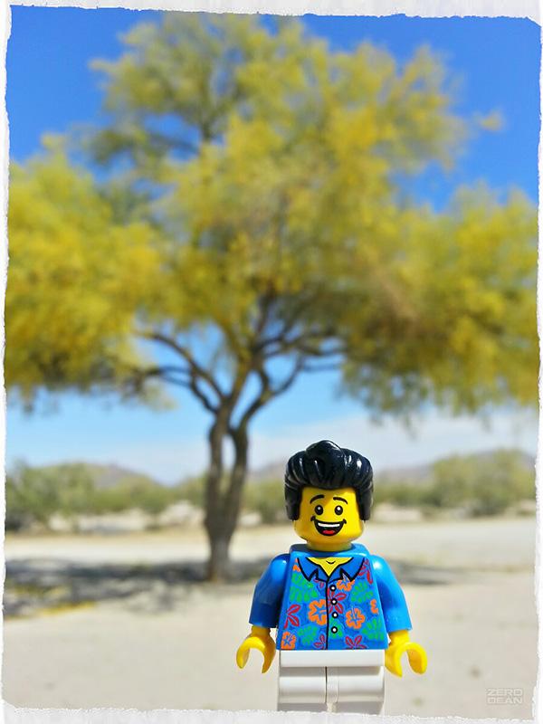 bill-dollar-says-he-really-likes-this-tree